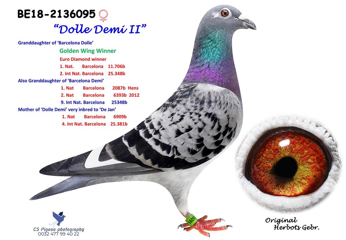 Dolle Demi II