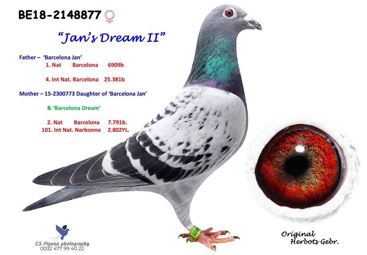 Jan's Dream II