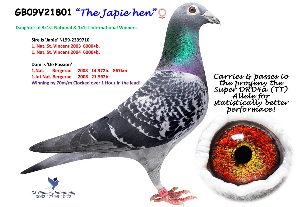 The Japie Hen