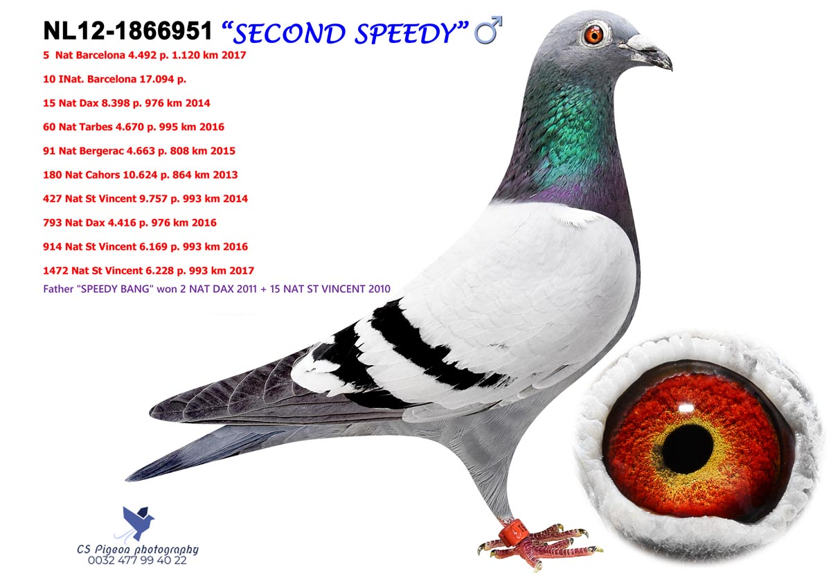 Second Speedy