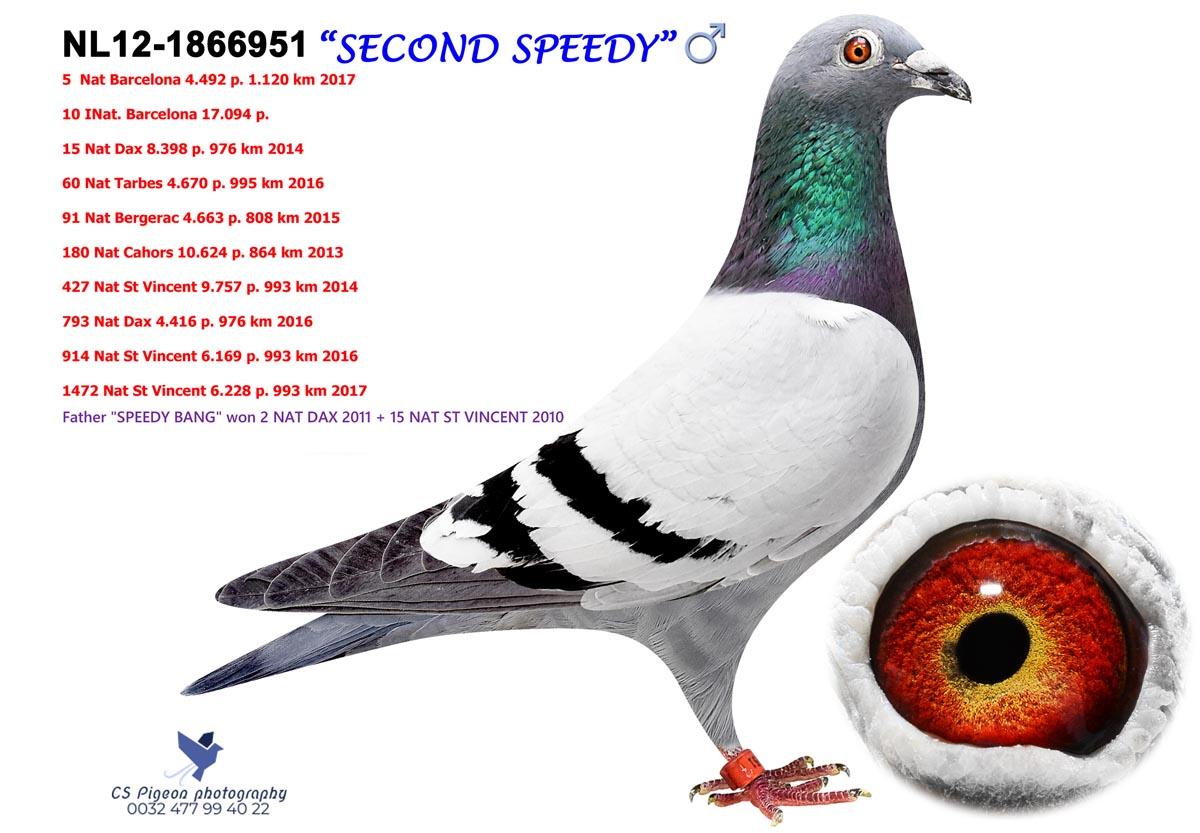 Second Speedy