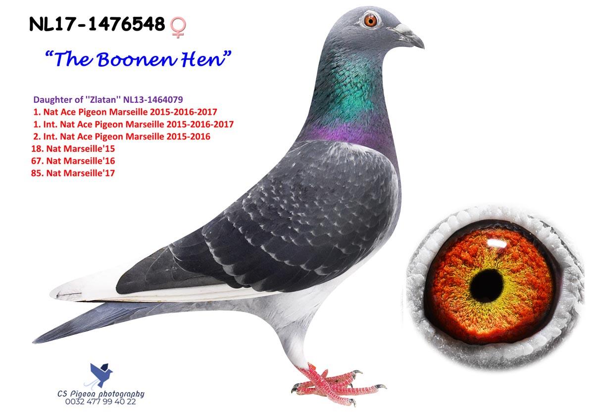 The Boonen Hen