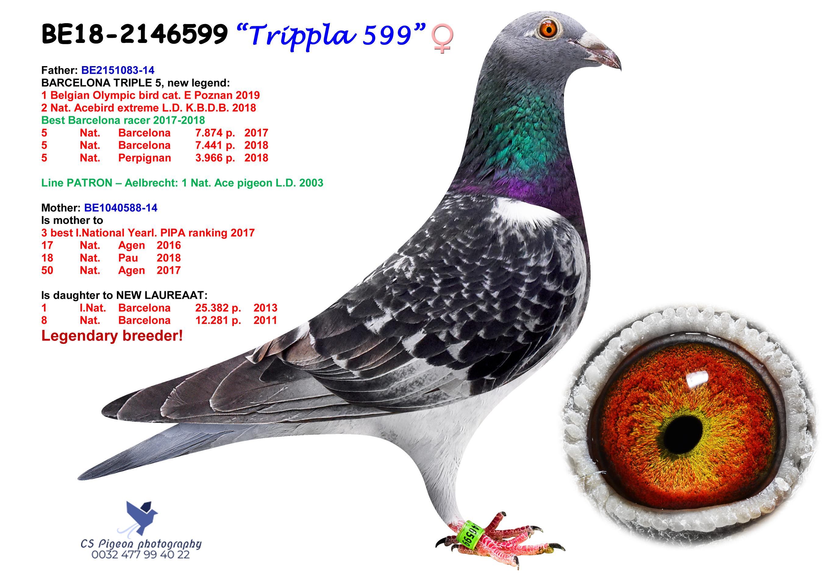 Trippla 599