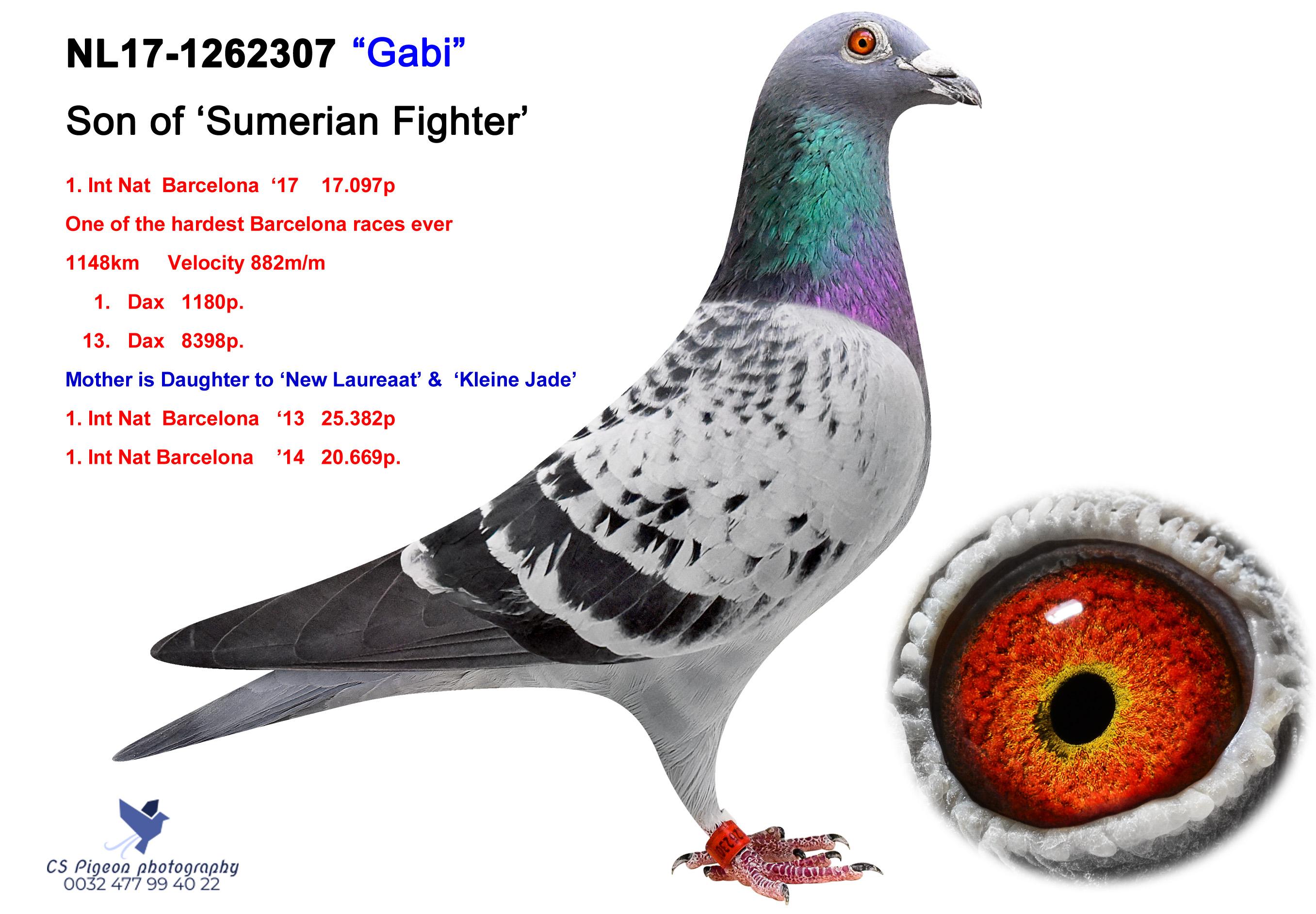 'GABI'