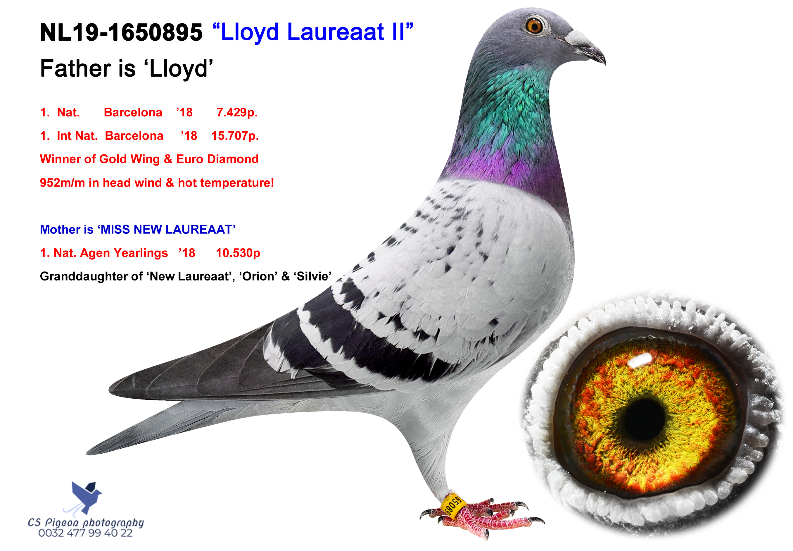 Lloyd Laureaat II